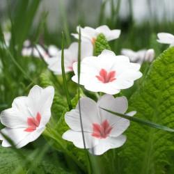 春天的植物