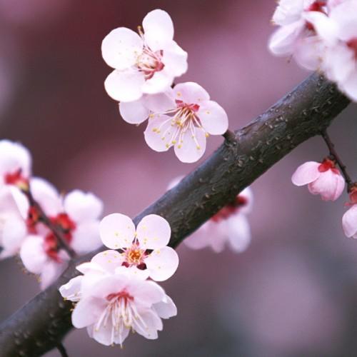 春天多美好